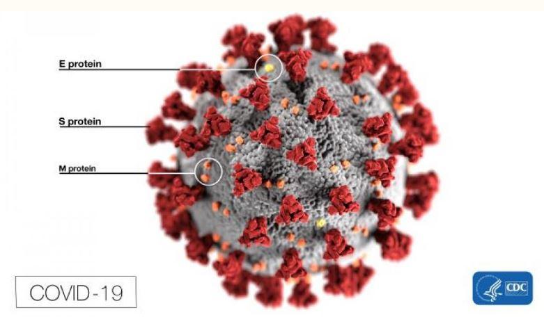 Coronavirus image from CDC